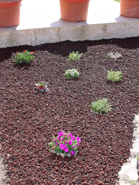 DIY-plantes-grasses-jardin